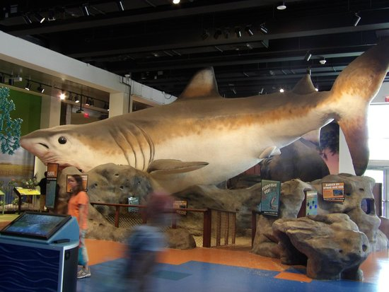 Museum of Discovery and Science: zoologia