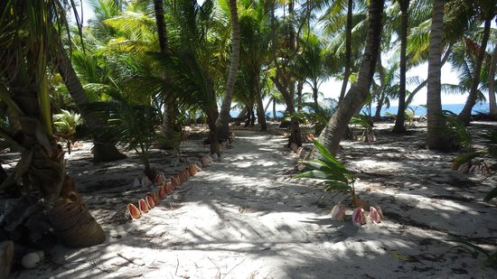 Pumpkin Caye: A conch-lined path from nowhere to nowhere up the middle of the caye.