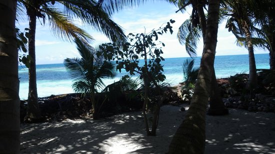 Pumpkin Caye : The entire island has palm fronds and conchs piled between the beach and the rest of the island.