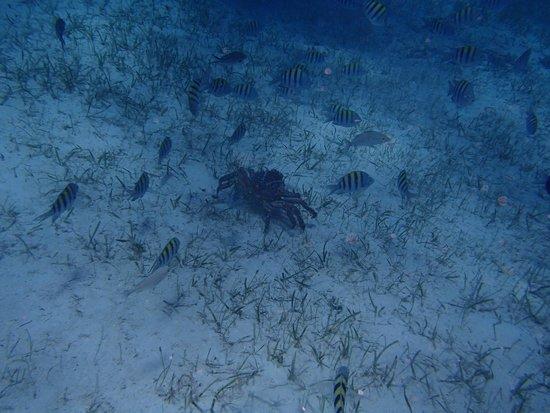 "Paradise Island Harbour Resort All Inclusive : Bahama Divers ""Barracuda Shores"""