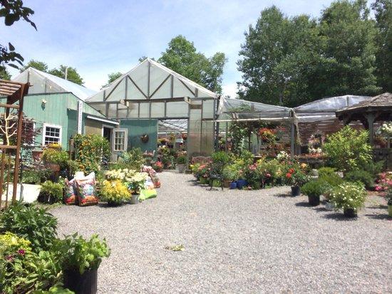 Origins Cafe at Carefree Gardens : Walking in!
