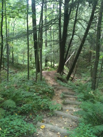 Ontario, WI: A shady trail through the park.