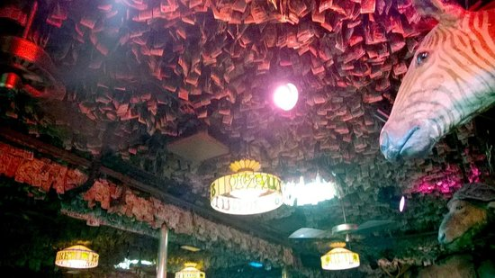 McGuire's Irish Pub & Brewery: Ceiling full of money