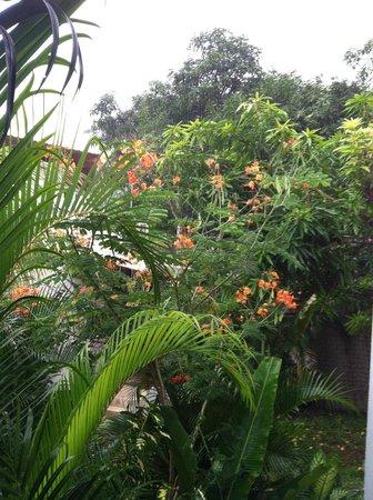 Playa Santa Teresa : rainy tropics