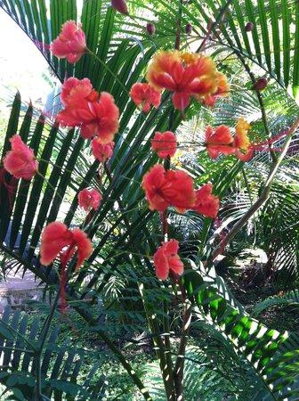 Playa Santa Teresa : flora bunda