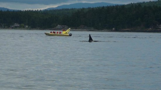 Outer Island Expeditions : Orca