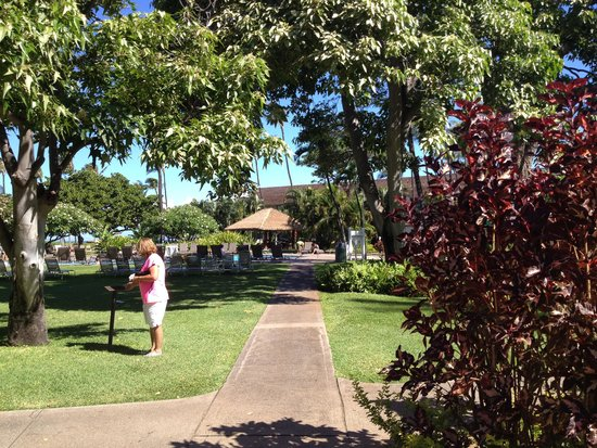 Kaanapali Beach Hotel : Grounds