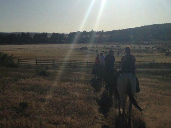 Zion Mountain Ranch: Horseback riding