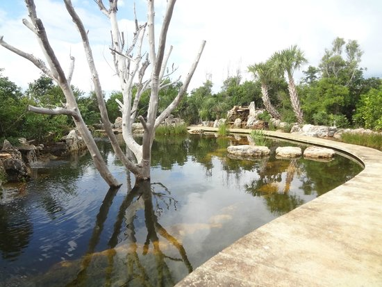 Leon Levy Native Plant Preserve: The turtle pond - ask at the welcome center about feeding the turtles