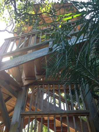 Leon Levy Native Plant Preserve: Ethan's Tower