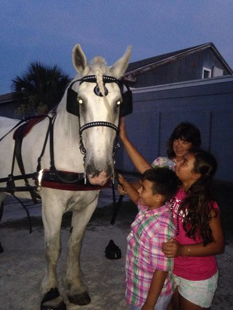 Amelia Island Carriages : Petting Boomer!!