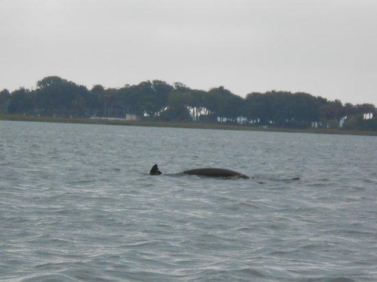 Charleston Outdoor Adventures: Dolphin