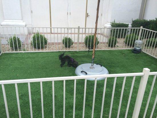 Caesars Palace: Doggy play and potty area