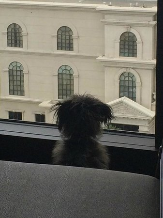 Caesars Palace: Even the dog liked the view