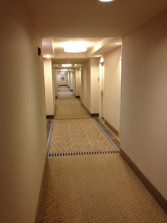 Hilton Garden Inn Portsmouth Downtown : Corridor with warm color