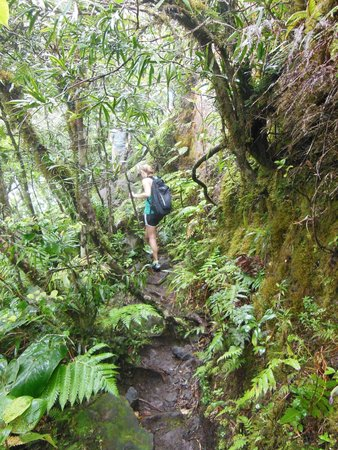 Poinciana Tours : Hiking through the rainforest