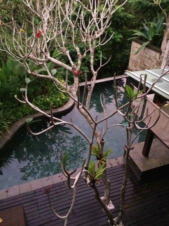 Gending Kedis Villas & Spa Estate: View from Villa