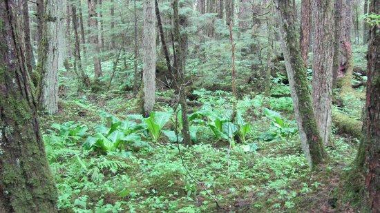Juneau Rainforest Garden: trees