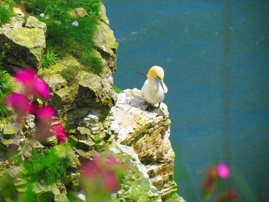 RSPB Bempton Cliffs: Bempton Cliffs