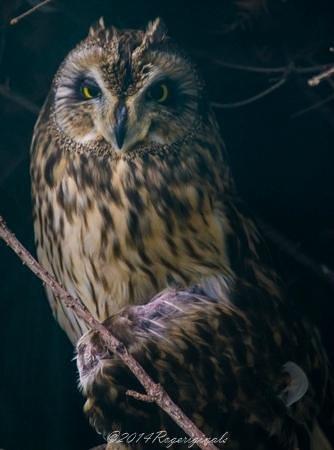 Adirondack Wildlife Refuge: Owls
