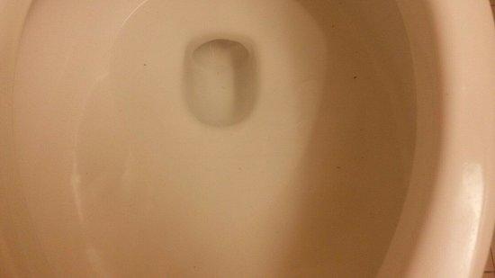 Best Western Plus Harrisburg East Inn & Suites: Dirty Toilet with poo deposits