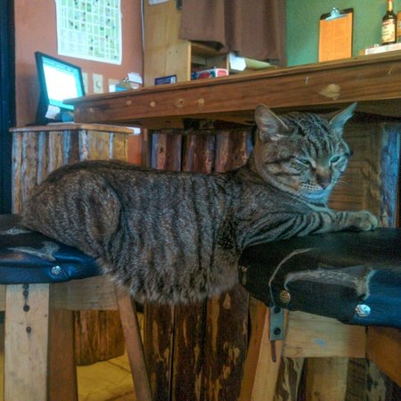 Earth Lodge: Crunchy, the bar cat
