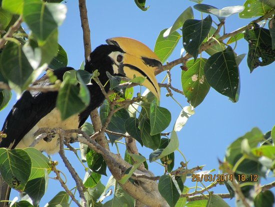 Chalong Beach Front Residence : птички