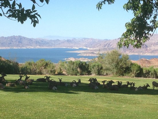 Pink Jeep Tours Las Vegas: Horned sheep resting in the shade with Lake Mead in the background