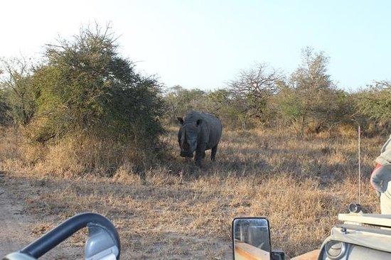 Kapama Buffalo Camp: No closer to the rhino please!!!