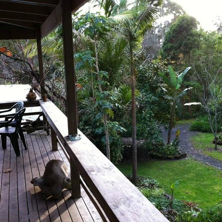 The Tree House: The view from the Communal space
