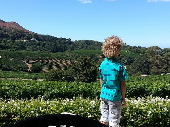 Constantia Glen Winery : Great views and ambience