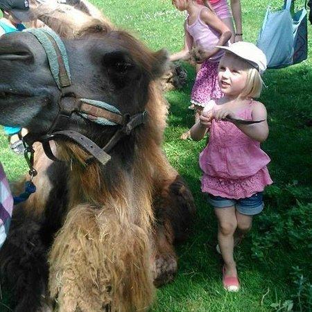 La Maison des Chameaux: Voulez-vous brosser un chameau?
