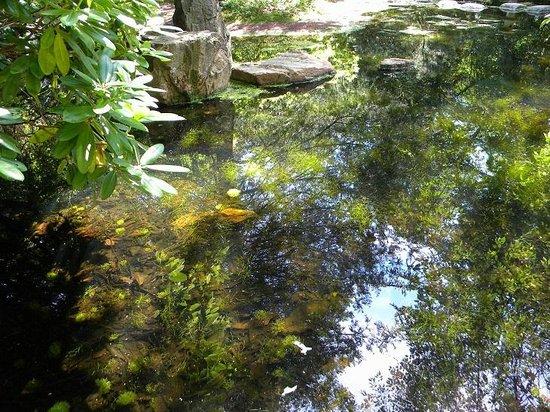 Botanical Garden : Ботанический сад Гетеборга