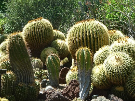 The Huntington Library, Art Collections and Botanical Gardens : The subtropical garden