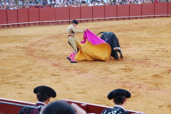 Plaza de Toros de la Maestranza : Action - Bull vs Man