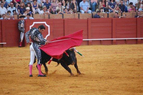 Plaza de Toros de la Maestranza : Action - Bull vs Main Matador (Note sword under cape)