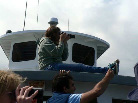 San Juan Excursions: Brittany, one of the naturalists, taking photos and telling us all about whales she has known.