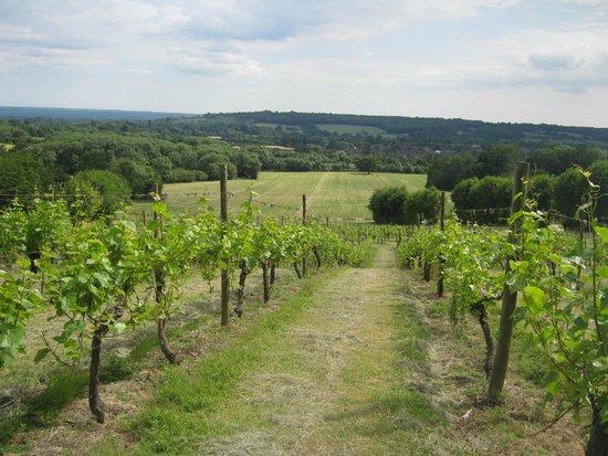 Godstone Vineyards: Vines in June