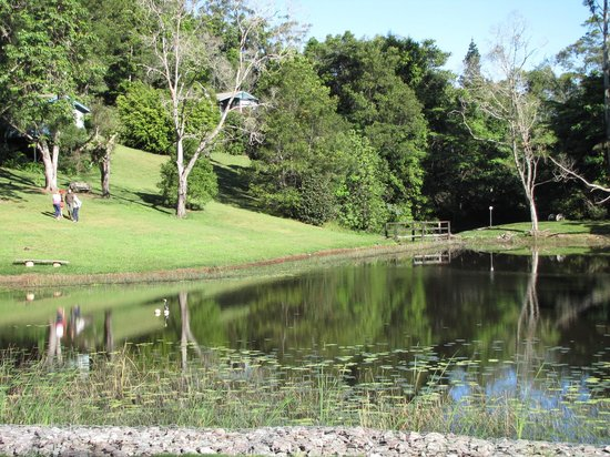 Montville Country Cabins : The Lake