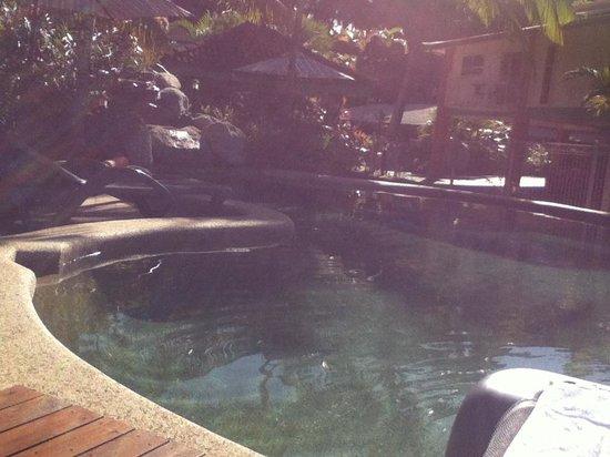 ليتشي تري هوليداي أبارتمينتس: pool side