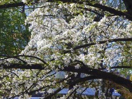 Aasee: Blütenpracht an den Wasserstraßen