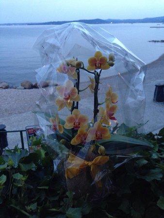 Le Brede : Vista lago con orchidee
