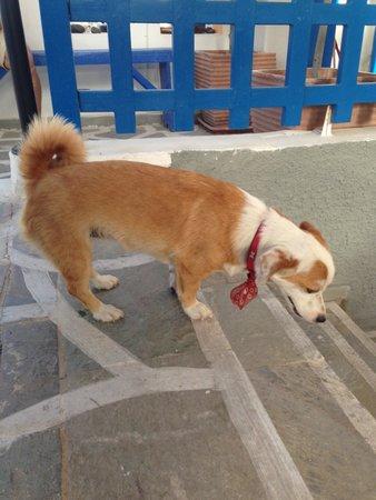 Kamari Star Hotel : la fantastica cagnolina