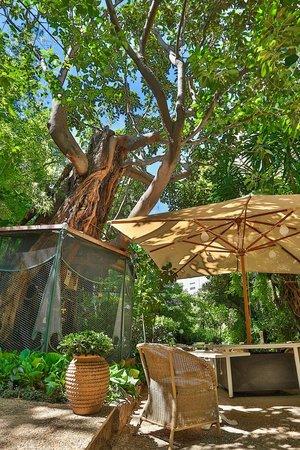 le jardin du windsor nice restaurant avis num ro de t l phone photos tripadvisor. Black Bedroom Furniture Sets. Home Design Ideas