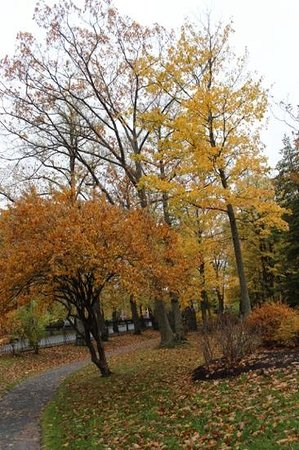 Halifax Public Gardens : Beautiful Fall Foliage
