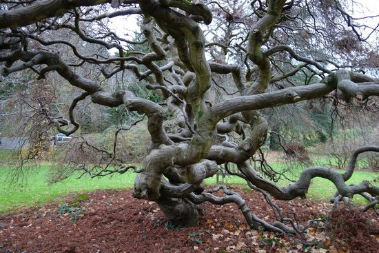 Gliffaes Country House Hotel: Beautiful trees to enjoy