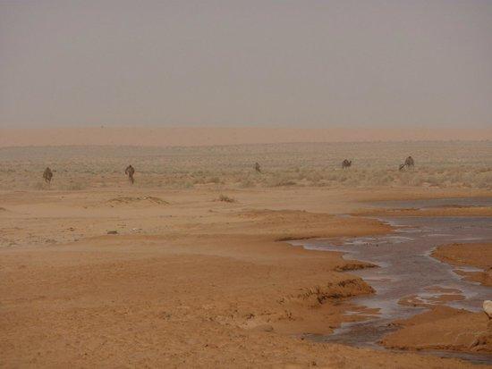 Djerba Holiday Beach: Excursion