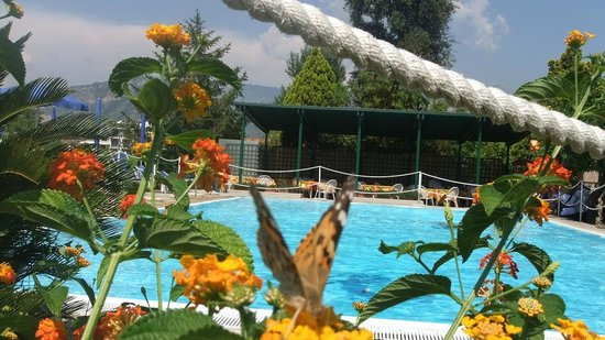 Hotel Girasole : View of flowers, swimming pool and covered terrace.