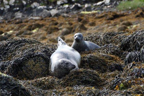 Dunvegan Castle & Gardens: Baby Seals