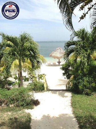 Turquoise Bay Dive & Beach Resort: Bajada a la playa del Resort
